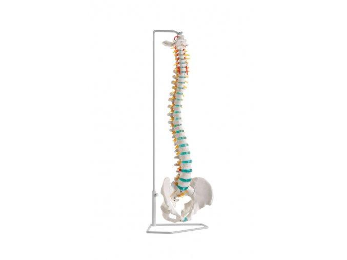 a250 erler zimmer masazna pomocka kostra skelet pater panev chrbtica a stojan