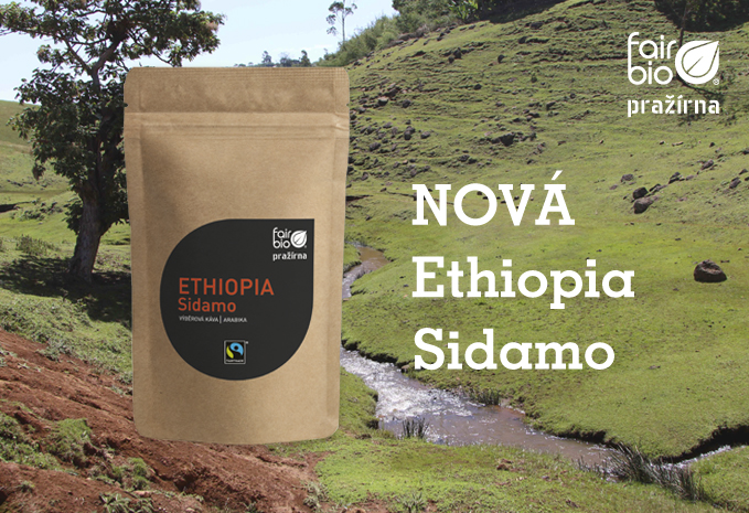 Novinka Ethiopia Sidamo