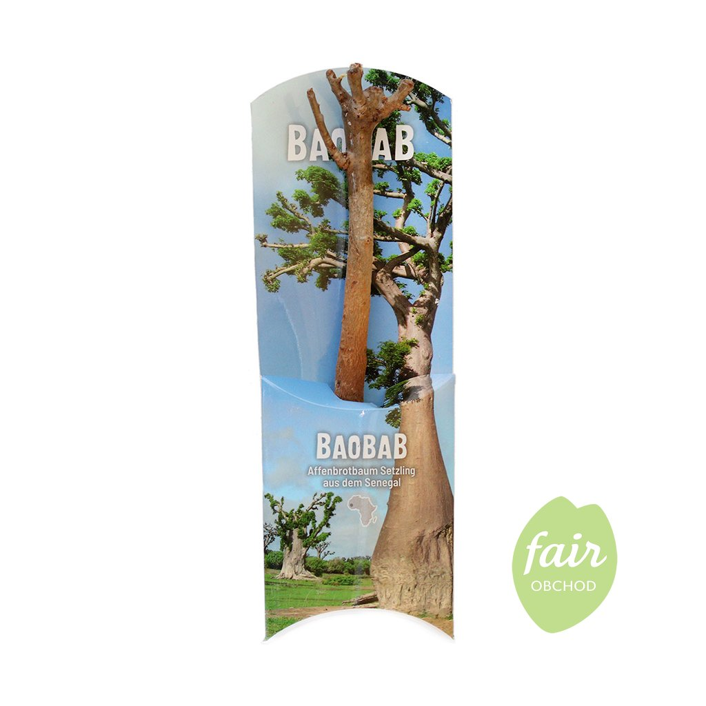 Fair trade sazenice baobabu ze Senegalu
