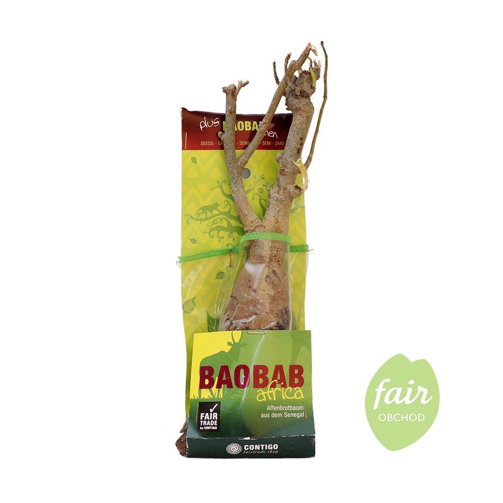 Fair trade sazenice baobabu ze Senegalu 4,5 roku