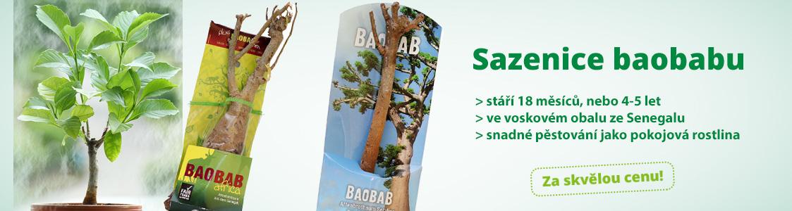 Fair trade sazenice baobabu