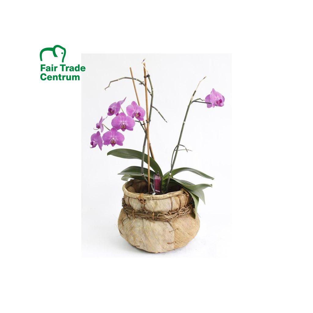 Fair Trade přírodní květináč z hogly a kokosu z Filipín