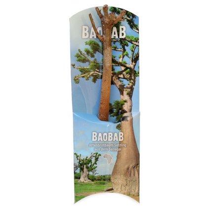 Fair trade sazenice baobabu ze Senegalu 18 měsíců