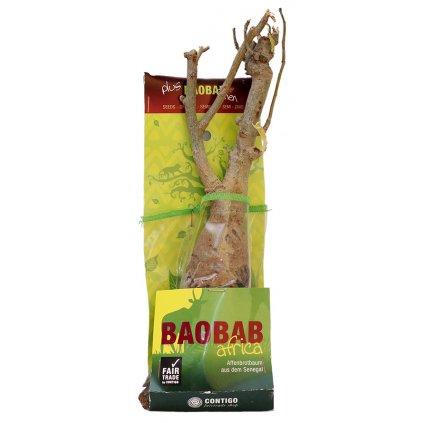 Fair trade sazenice baobabu ze Senegalu 4 5 let a semínka