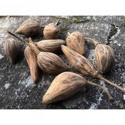 Fair trade sušený plod baobabu k dekoraci, 6 9 cm