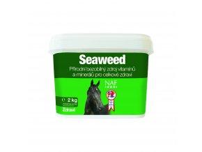 Seaweed - Mořské řasy