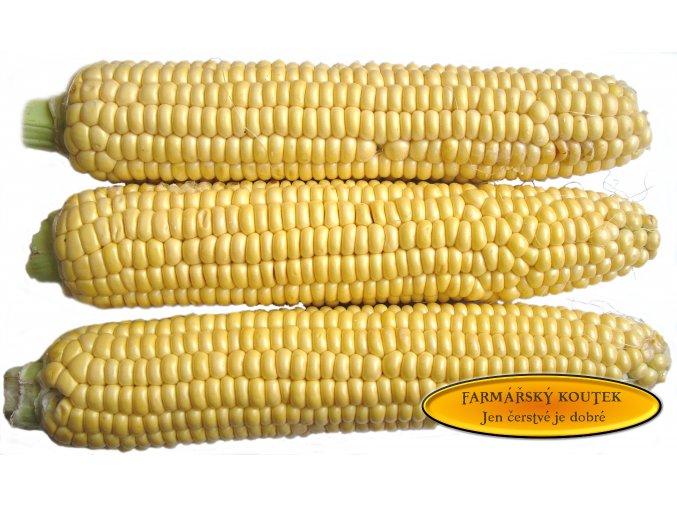 Kukurice cukrova