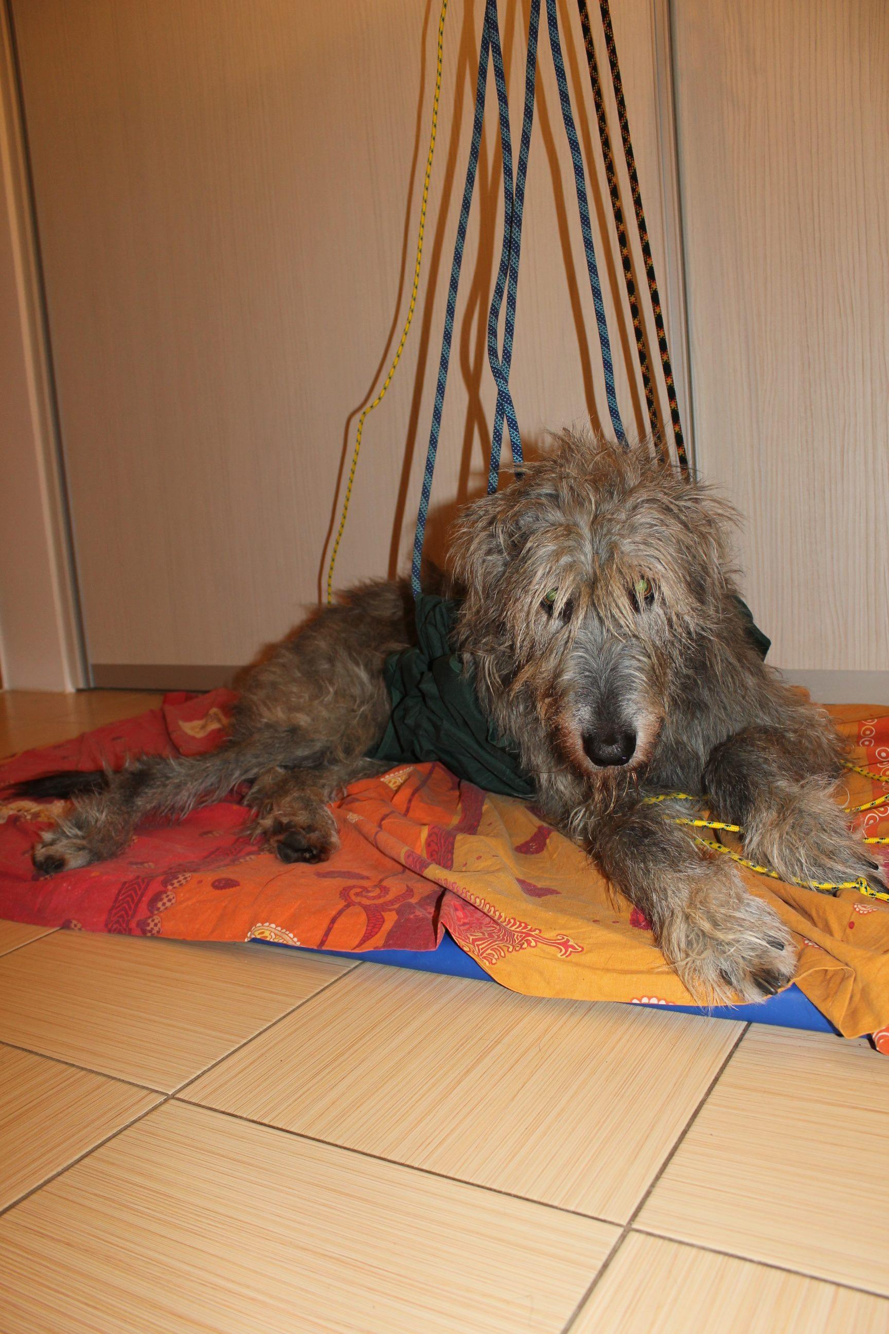 Polyneuropatie - pes nám přestal na 6 měsíců chodit
