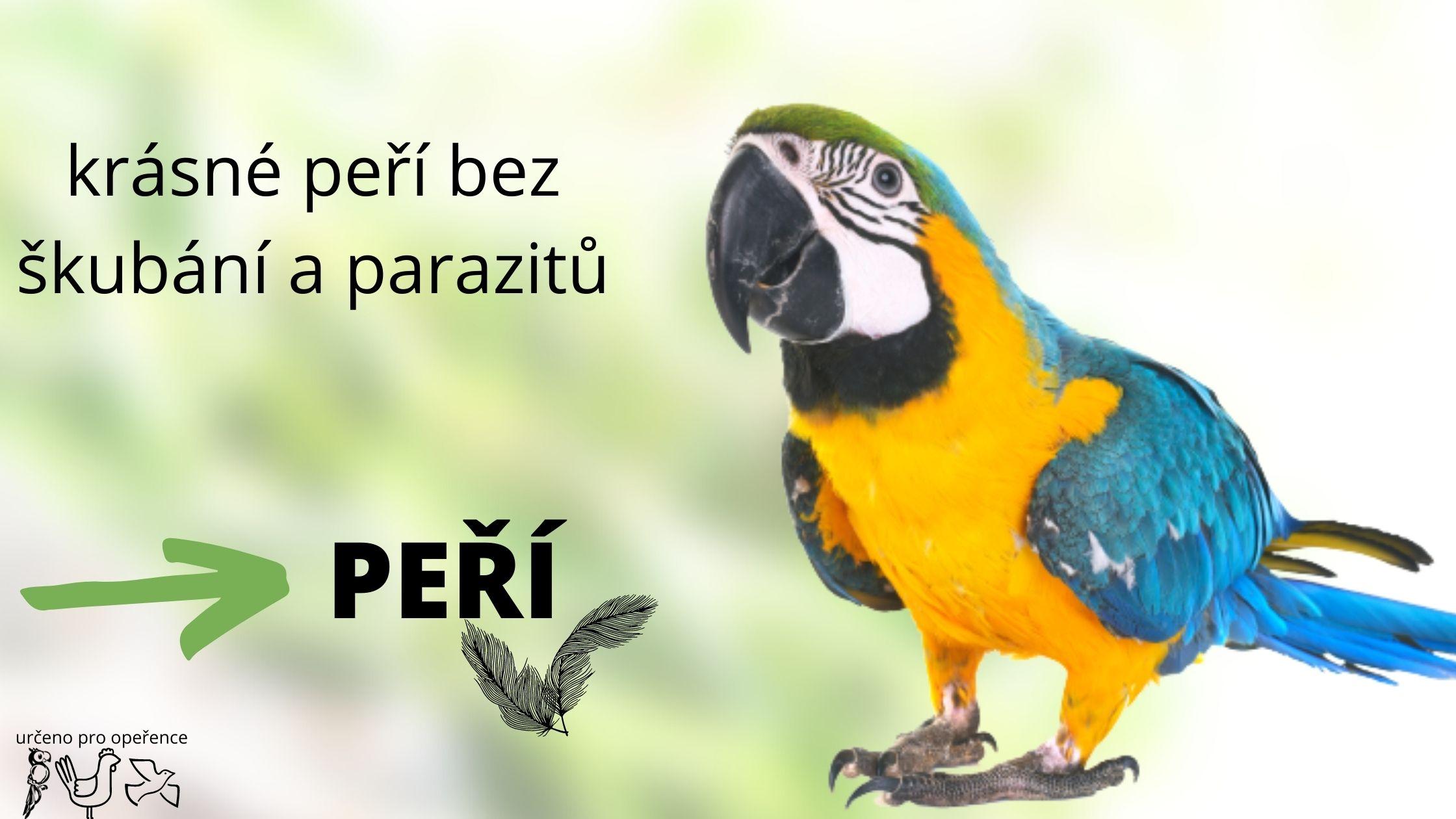 Proč si papoušek škube peří, jak odstranit škubání peří