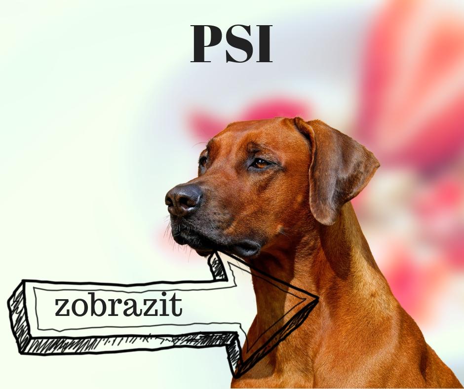 pes psi  paraziti mytí srst klíště uši nos rána poranění packy