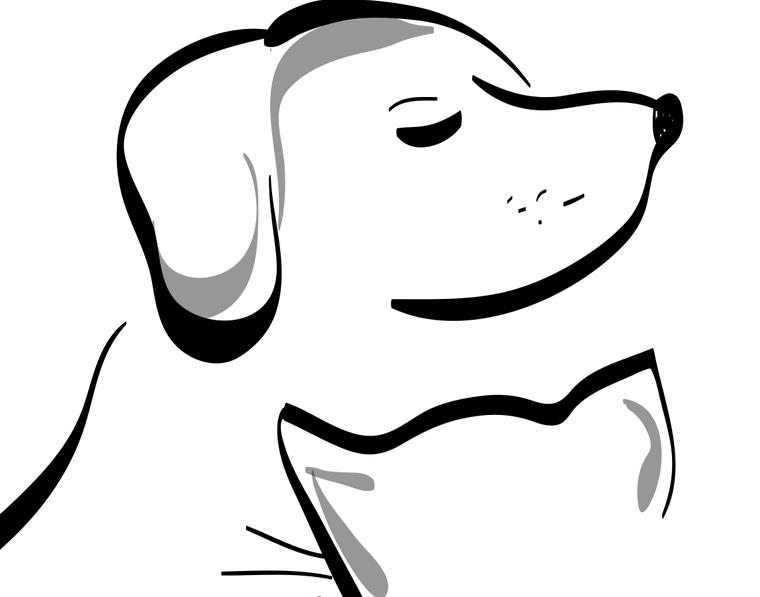 Uši a nos