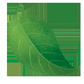 fe-leaf