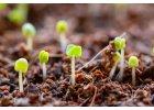 Nakličovače a semena
