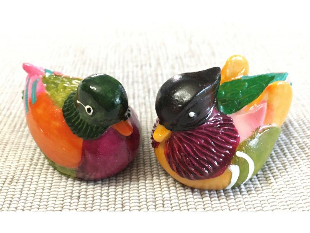 Mandarinské kachničky - collor