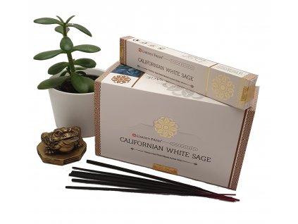 Kalifornská bílá šalvěj