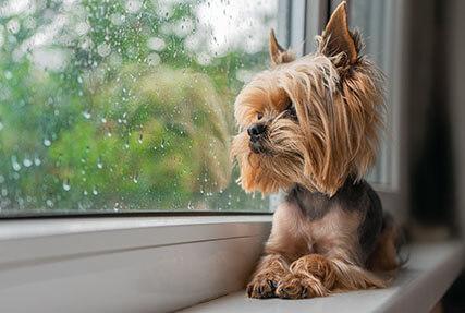 Ako zamedziť psovi, aby nezničil rolety?