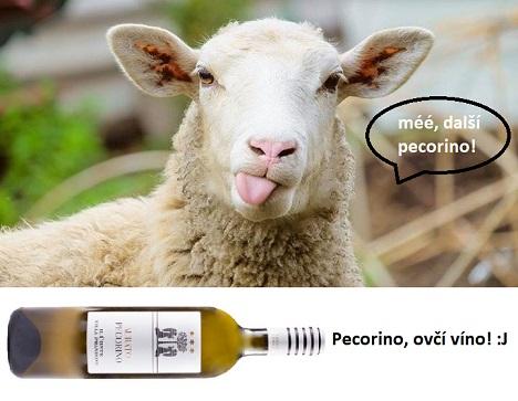 Pecorino, víno nebo sýr?