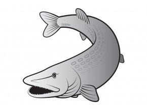 Delphin nálepka Silver Štika