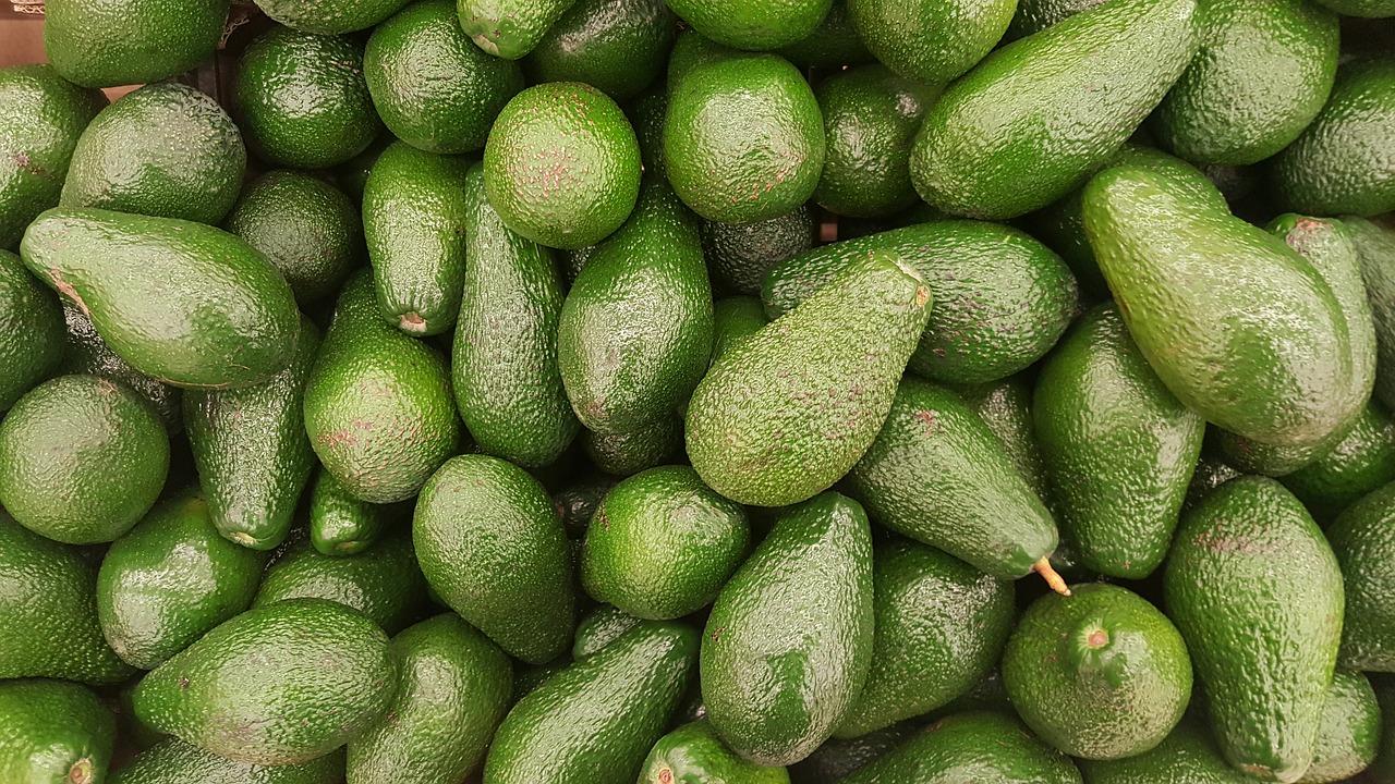 avocado-blog
