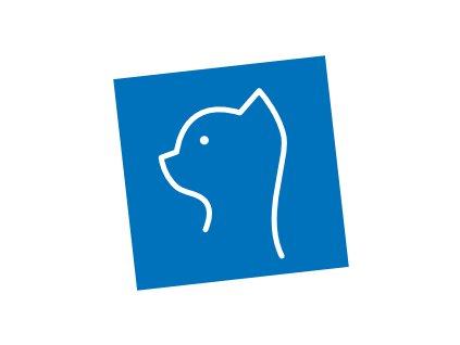 kočka hlava