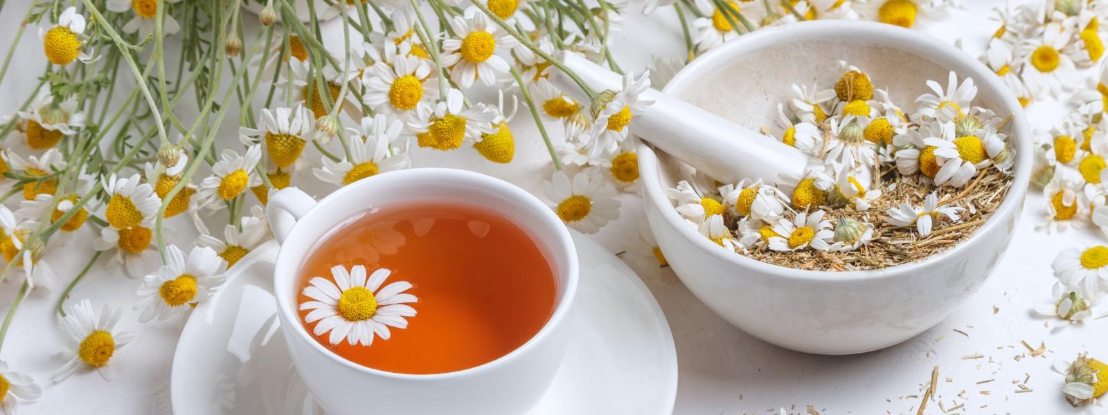 Žlutě kvetoucí byliny – šálek heřmánkového čaje