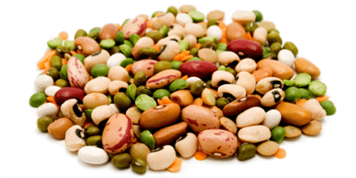 beans-global-sourcing