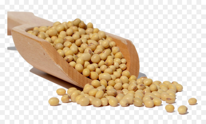 382-3824614_soybean-png-download-image-soya-bean-png-transparent