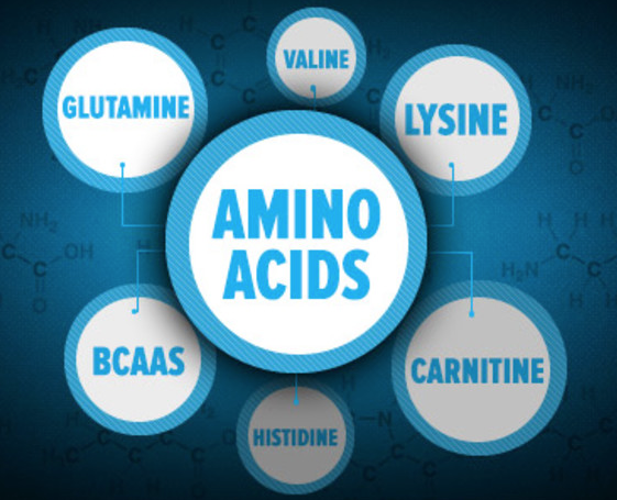 Aminokyseliny