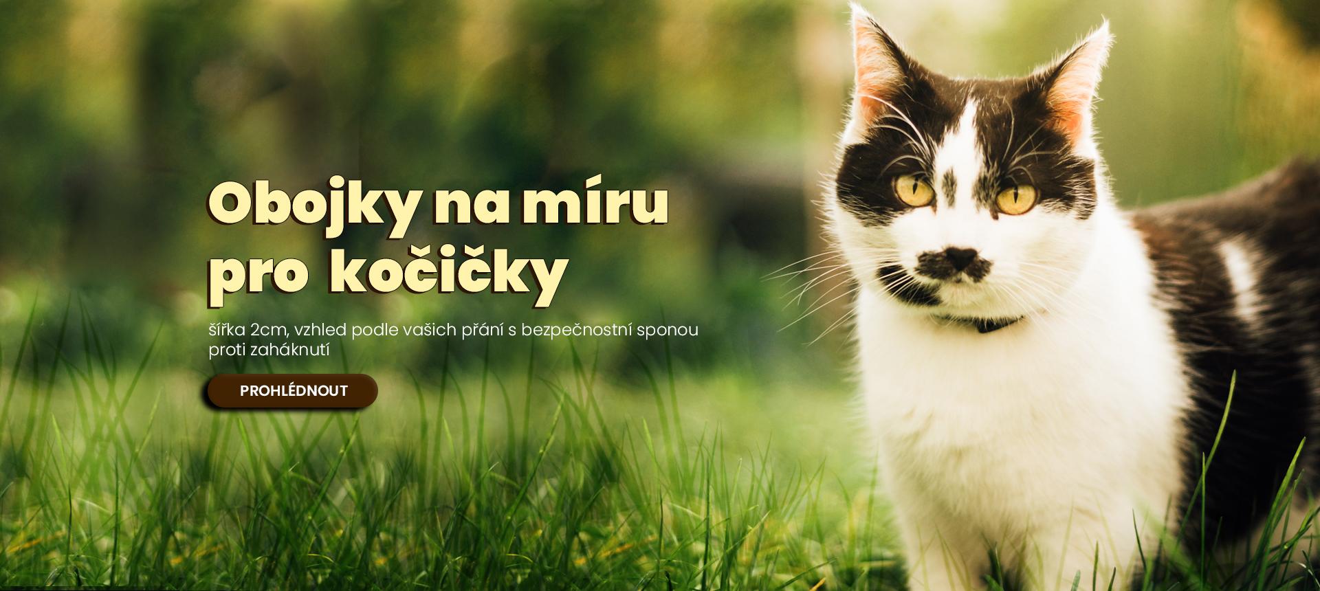 Obojek pro kočky