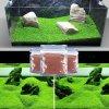 akvarijni rostliny do akvaria