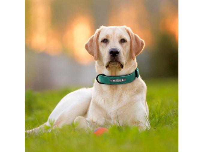 Psí obojek se jménem - Obojky pro malé, střední a velké psy včetně vyrytí jména a tel.čísla