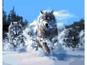 Malování podle čísel na plátno pro dospělé - Rozzuření vlci