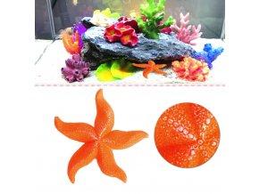 Akvárium- akvarijní dekorace mořská hvězdice