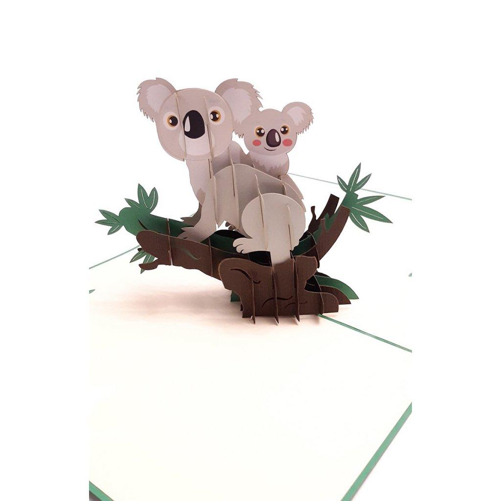 koala_detail