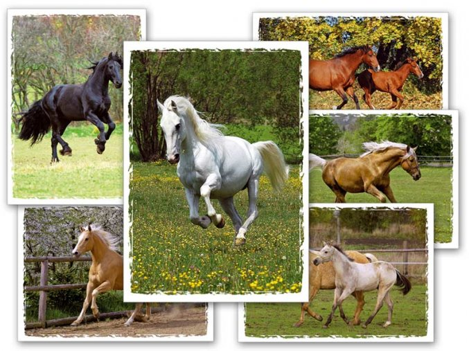 pohlednice kone