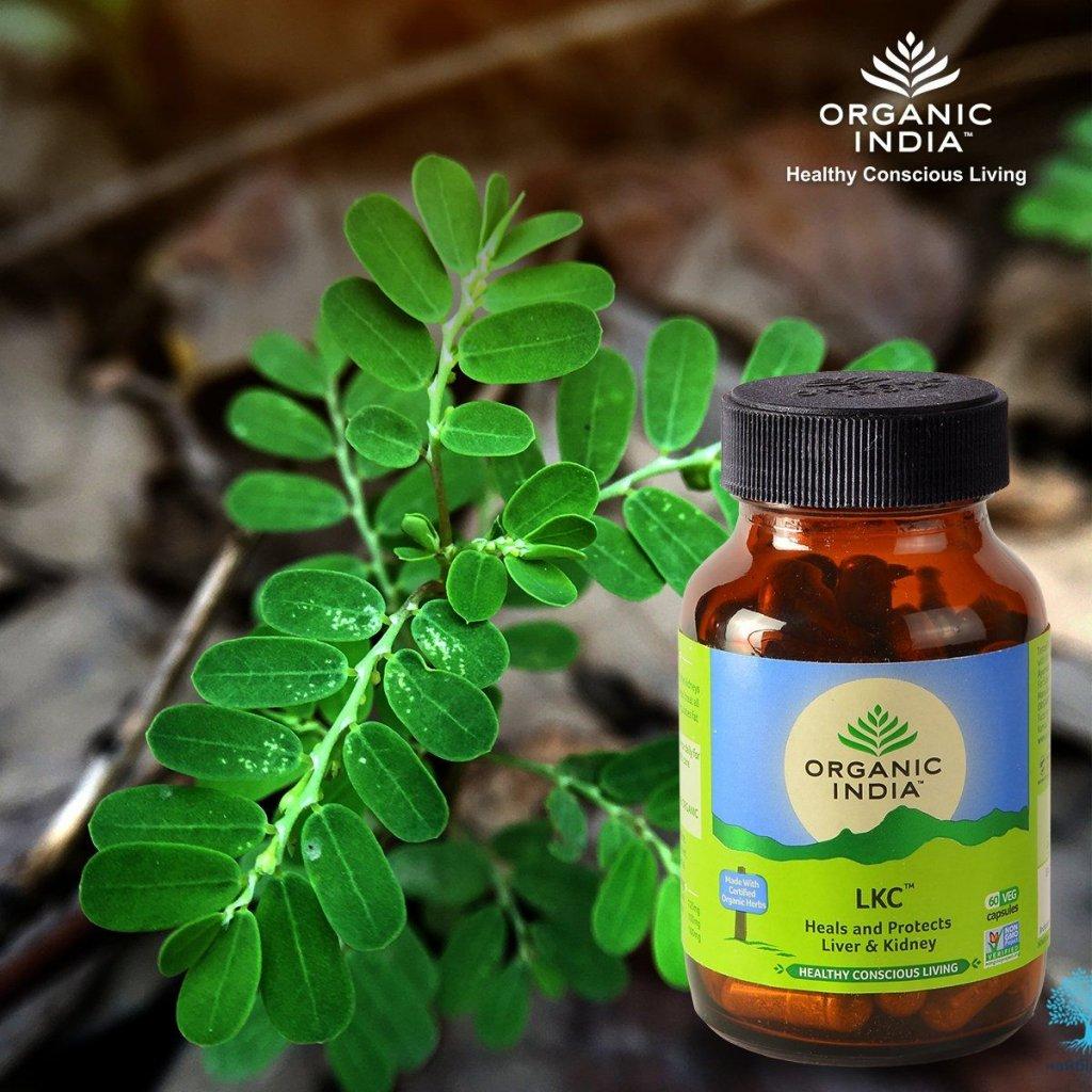 LKC kapsuly Organic India 600x600