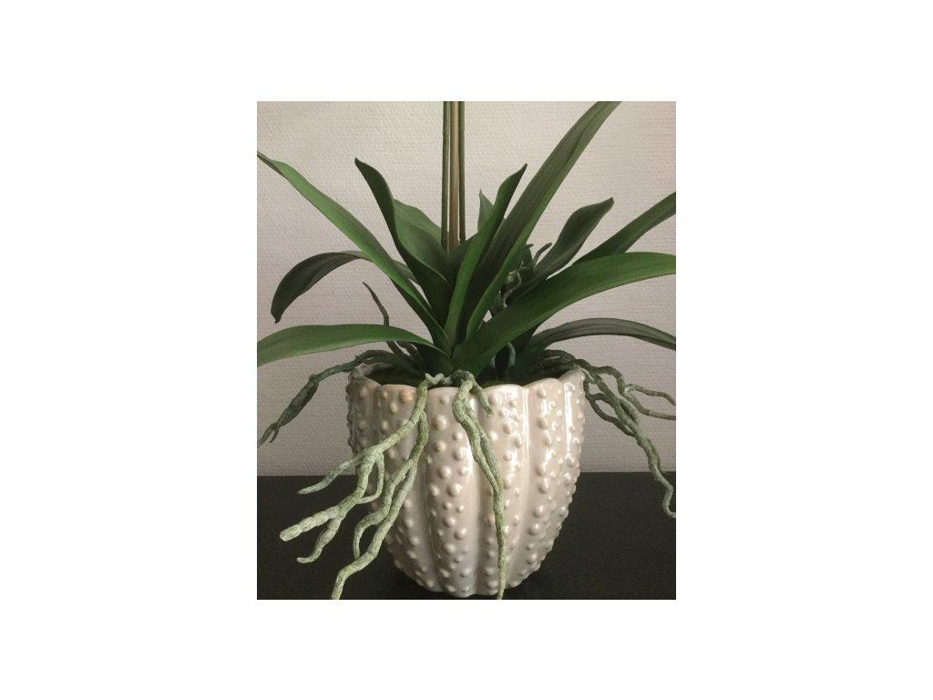 Venusta-květník