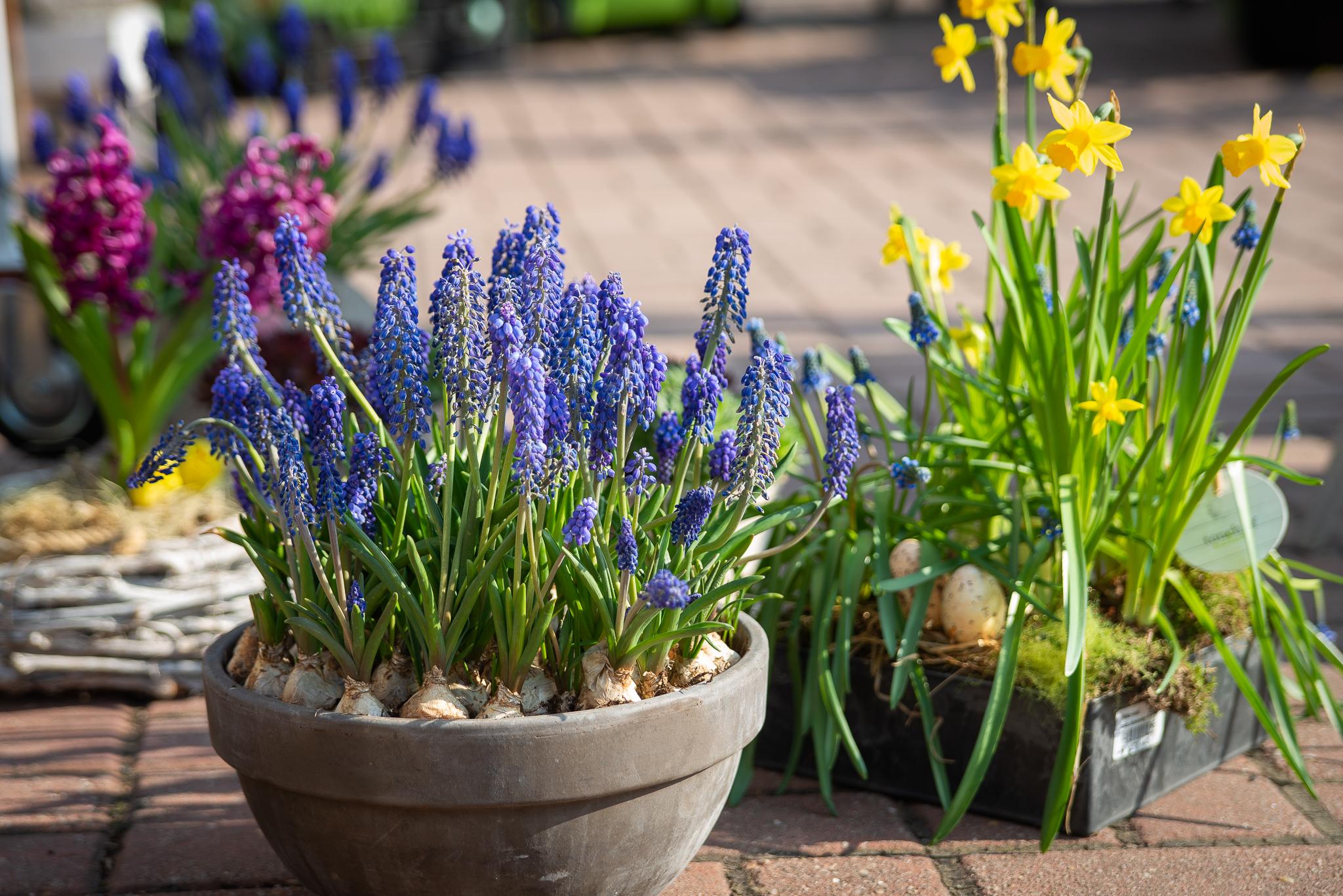 Velikonoce ve Flora centru: jarní aranžmá, truhlíky, dekorace!
