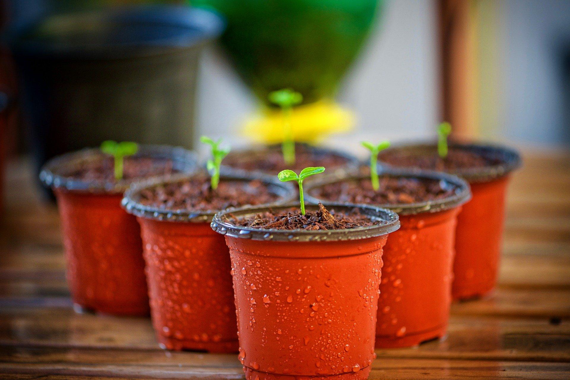 Jarní nabídka: bylinky, sadba brambor, cibule sazečka a další