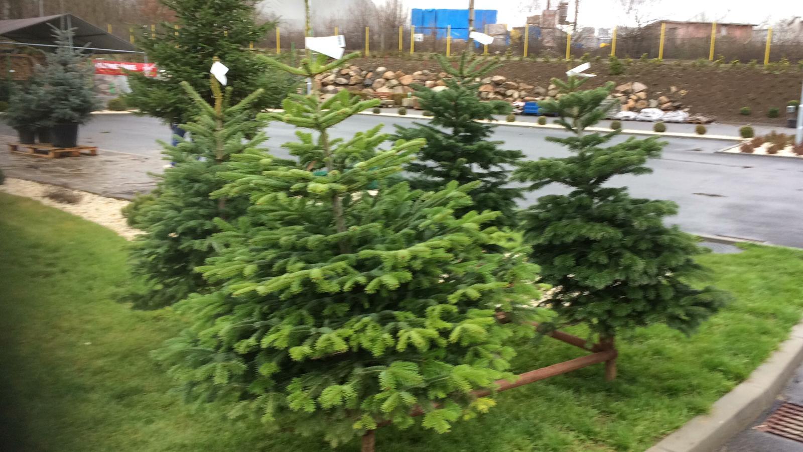 Prodej vánočních stromků - Flora Centrum Karlovy Vary
