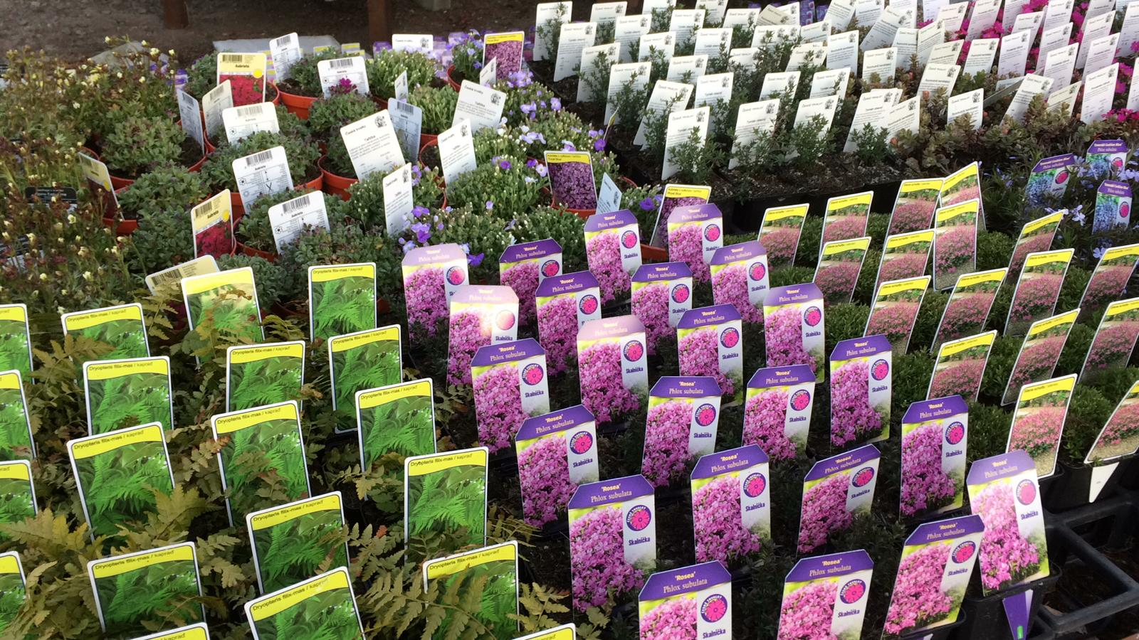 Sortiment letniček, balkónových rostlin a trvalek