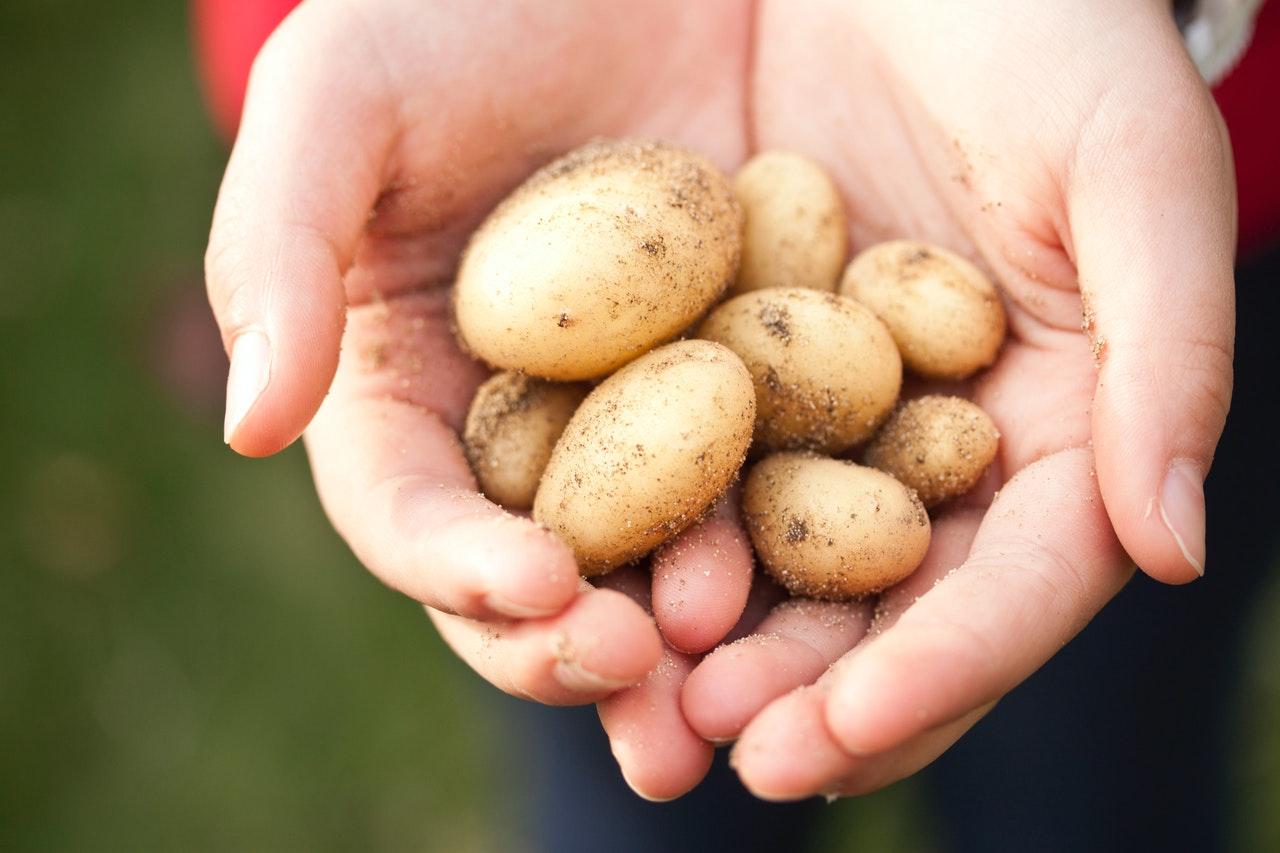 Jak na plevel a škůdce v bramborách