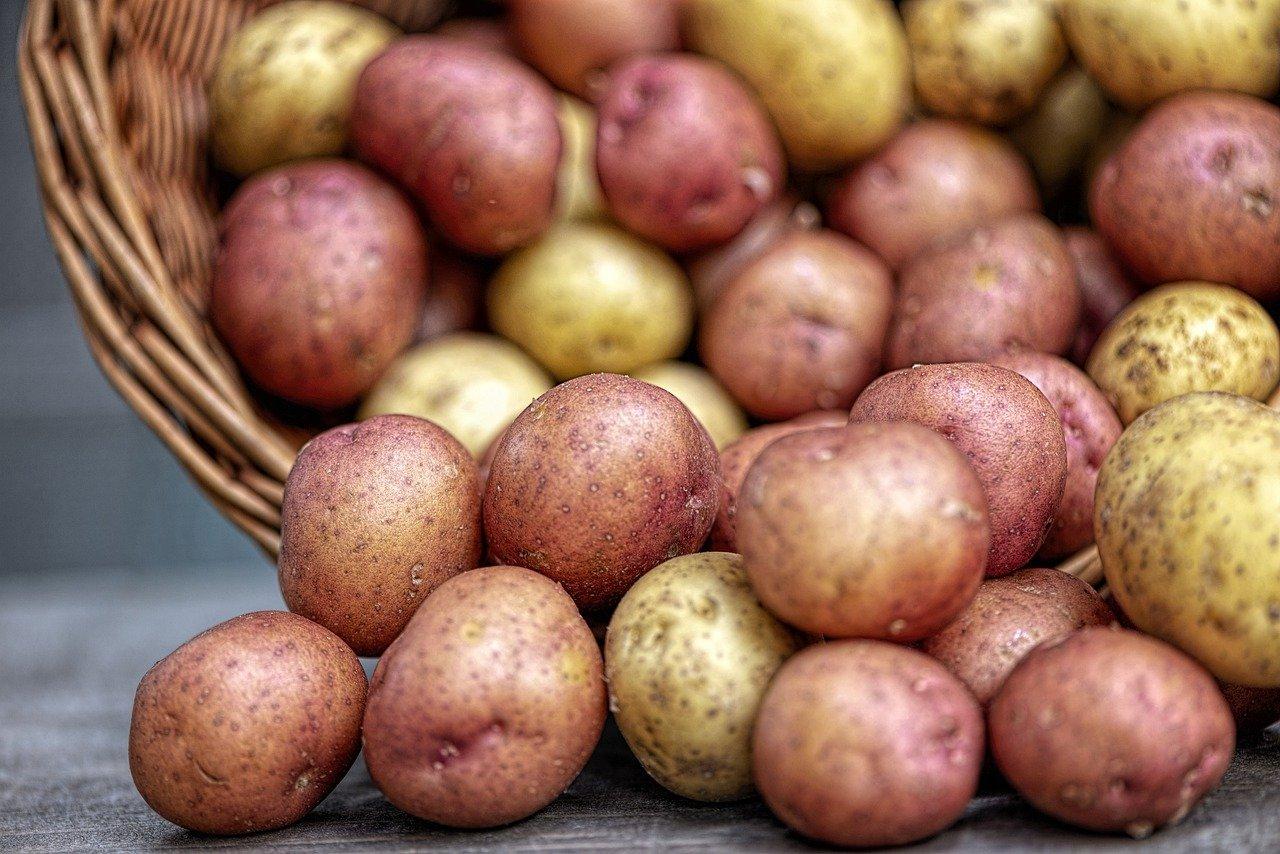 Sadbové brambory - 19 odrůd v prodeji!