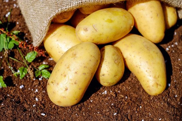 Kvalitní sadbové brambory v prodeji - 5kg a 10kg balení
