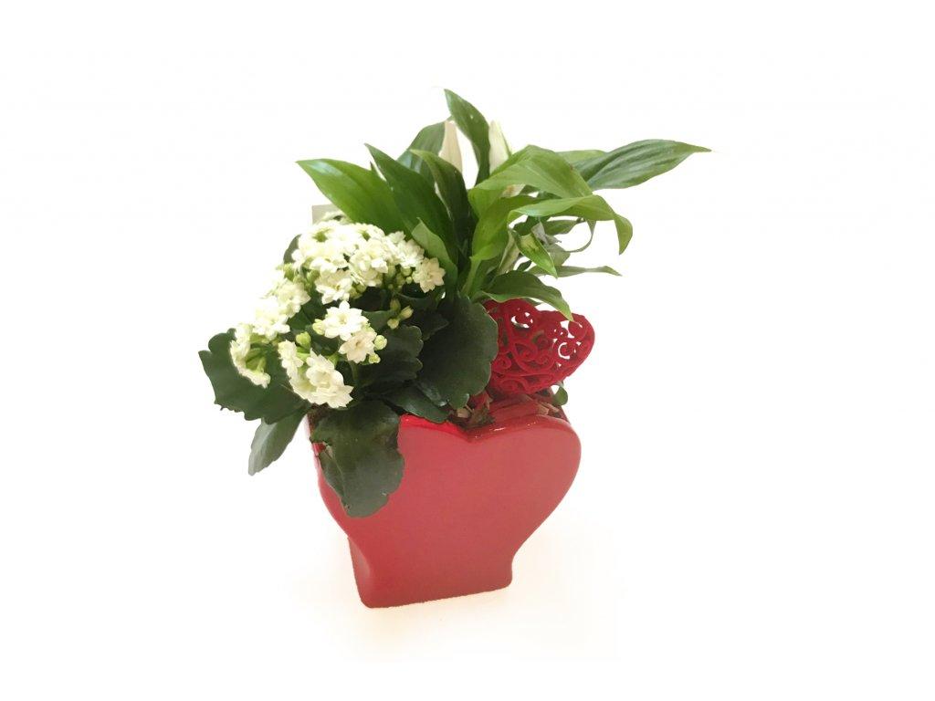 Rostliny sesazené v srdíčku