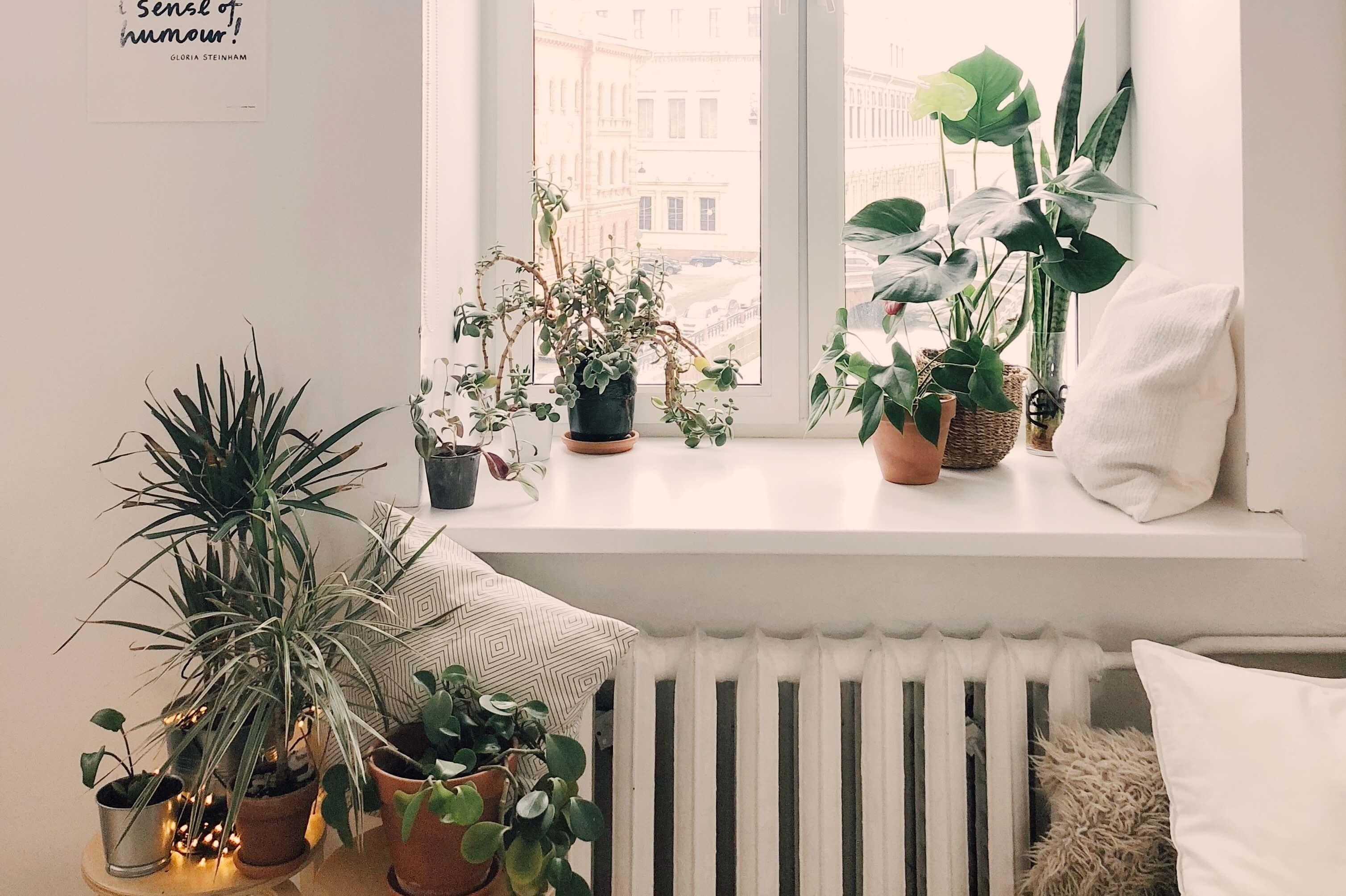 Ako na správne hnojenie rastlín? Tieto tipy je dobré si osvojiť