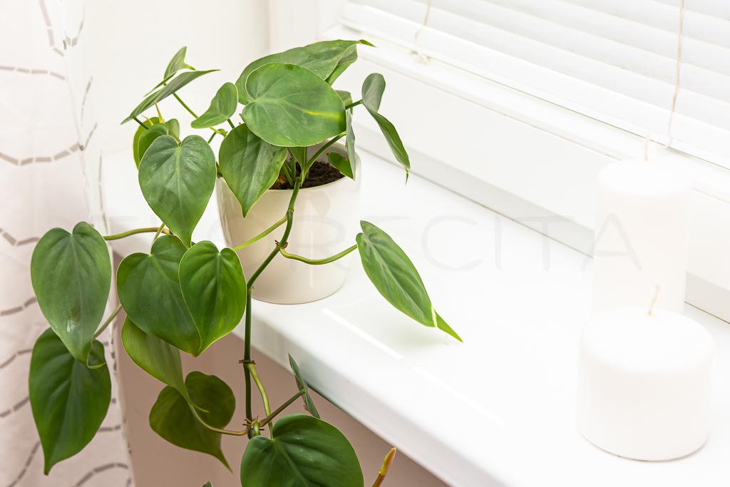 6 tipov na nenáročné izbové rastliny pre začiatočníkov