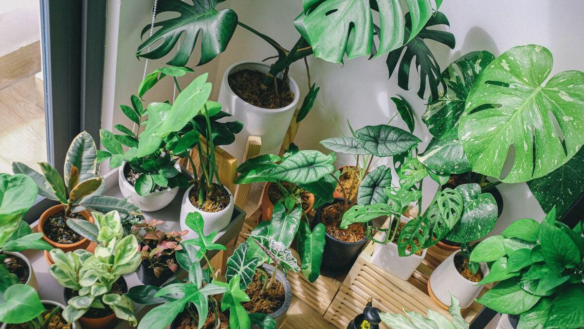 Najčastejšie problémy rastlín: Odhaľte, čo im vadí, máme pre vás riešenia