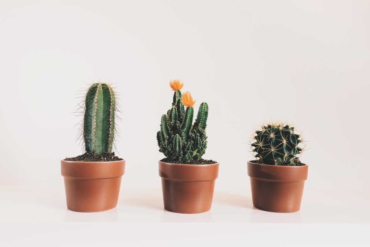 Ako sa starať o kaktusy a sukulenty? Poradíme vám