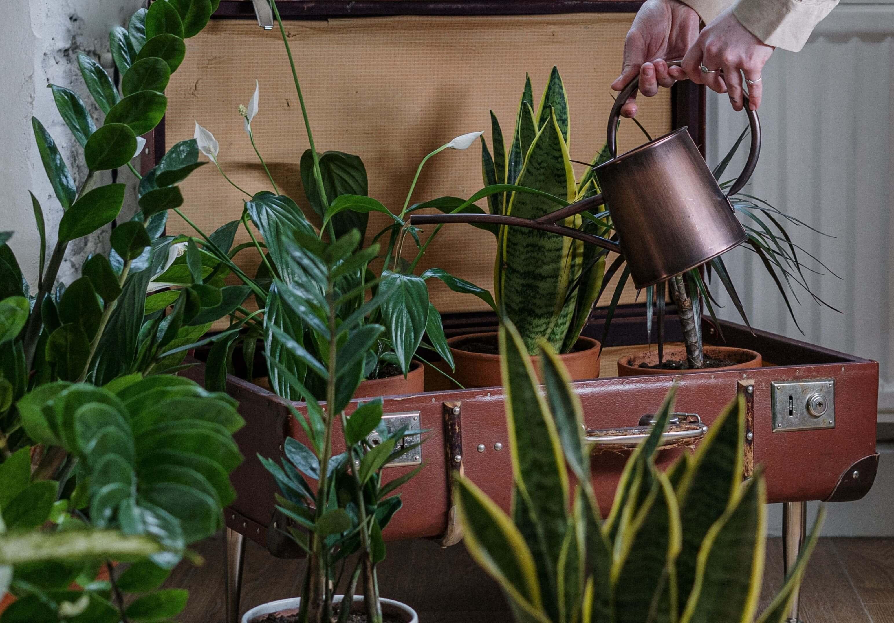 Ako sa postarať o izbové rastliny počas dovolenky? Týchto 5 tipov oceníte aj po návrate z nej